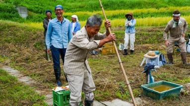 2017-09-02 Rice Harvesting DSC01290