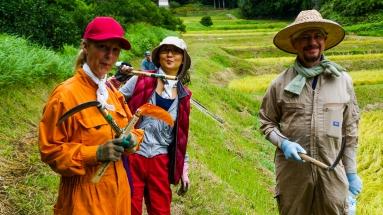 2017-09-02 Rice Harvesting DSC01293