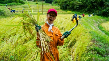 2017-09-02 Rice Harvesting DSC01297