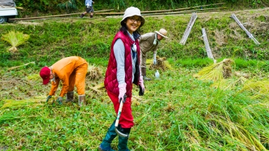 2017-09-02 Rice Harvesting DSC01326