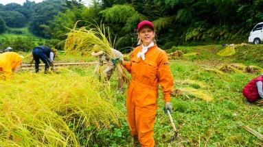 2017-09-02 Rice Harvesting DSC01331