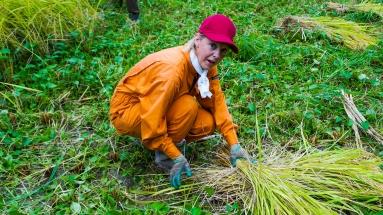 2017-09-02 Rice Harvesting DSC01339