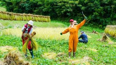 2017-09-02 Rice Harvesting DSC01347