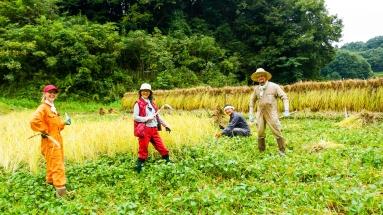 2017-09-02 Rice Harvesting DSC01352