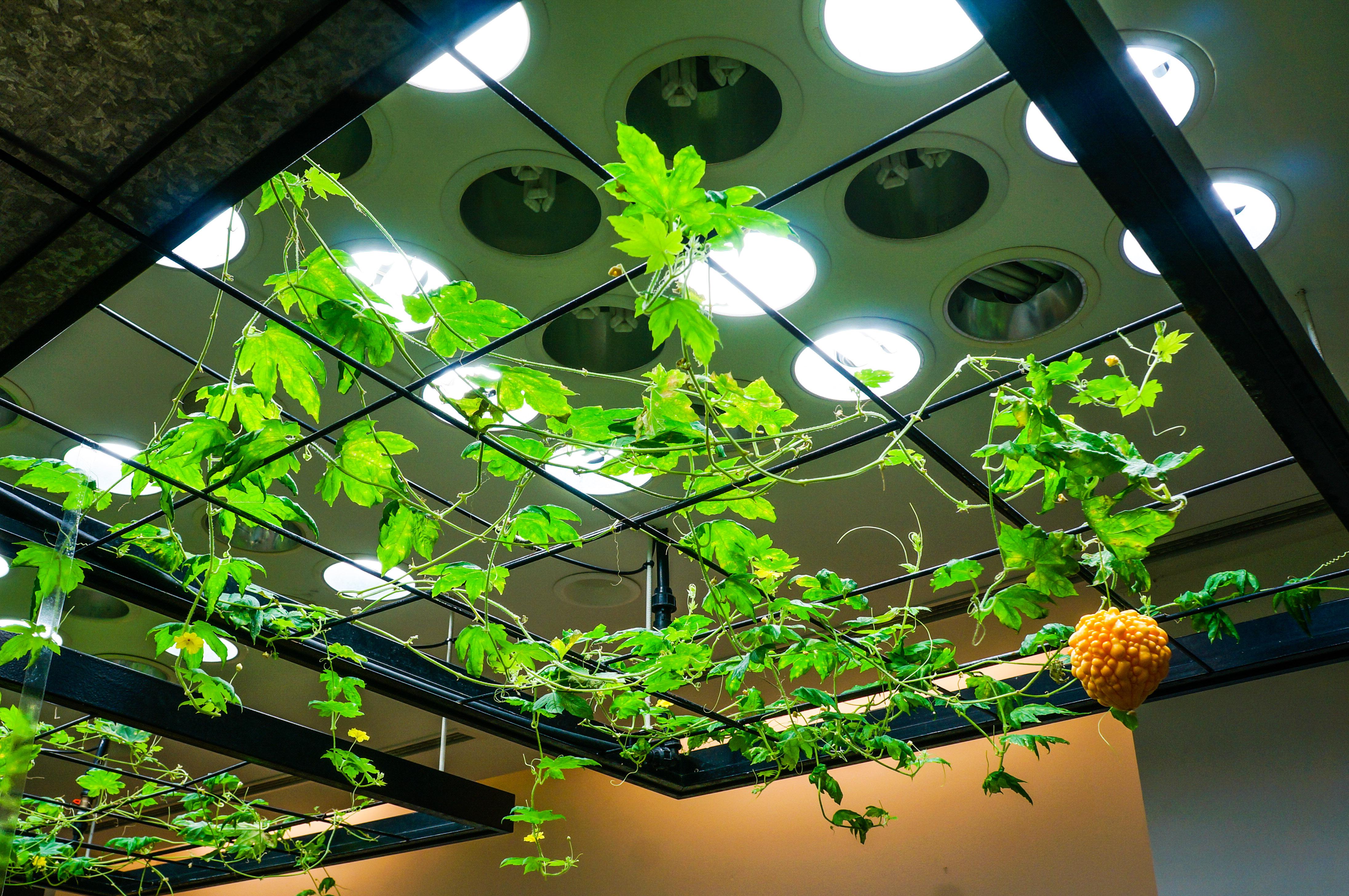 Indoor Hanging Plants Bunnings Hanging House Plants