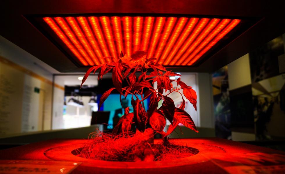 Pasona Indoor Experimental Growing Exhibit in Tokyo