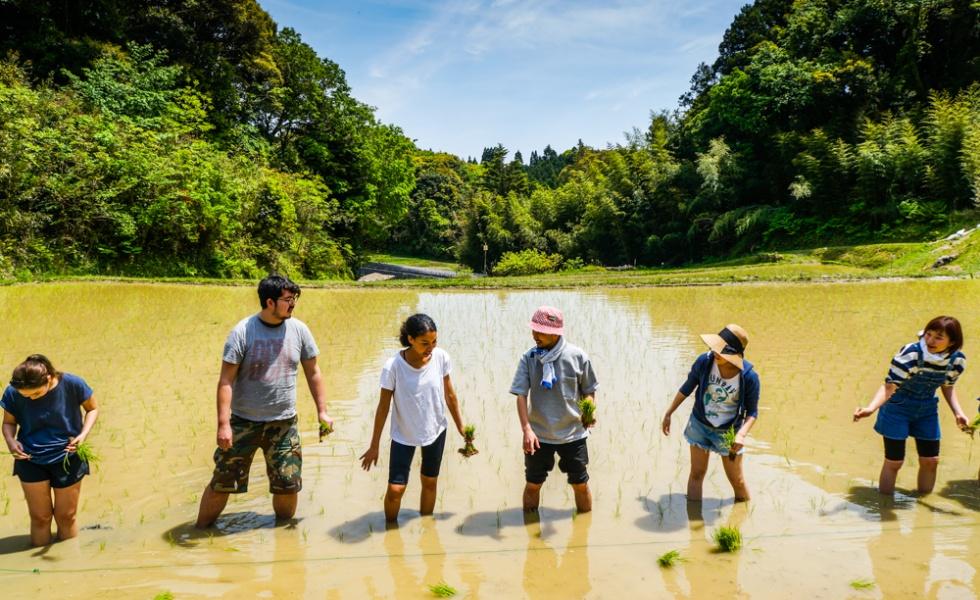 Mud, Sweat, and Tears – Rice Planting at Hackerfarm