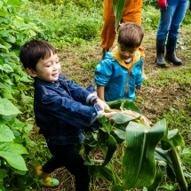 2017-10-05 Harvesting Corn DSC01776