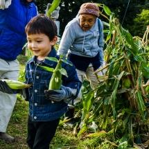 2017-10-05 Harvesting Corn DSC01811