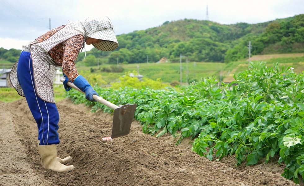 The Food Chain: Japanese Agriculture – From Farm to Supermarket